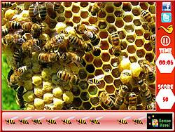 Honeycomb – Hidden Bees
